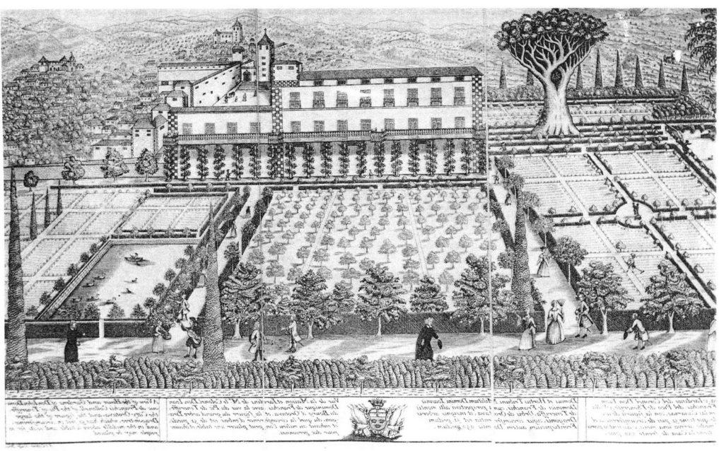 Jardines de Franchy con el Drago a la derecha
