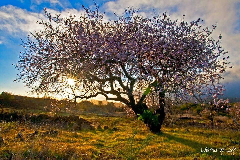 Finaliza el invierno, y los almendros ya avisan de que se aproxima la Primavera. Foto: LUISMA DE LEÓN.