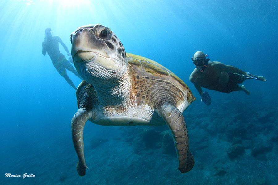Snorkel con tortugas. Foto: MONTSE GRILLO
