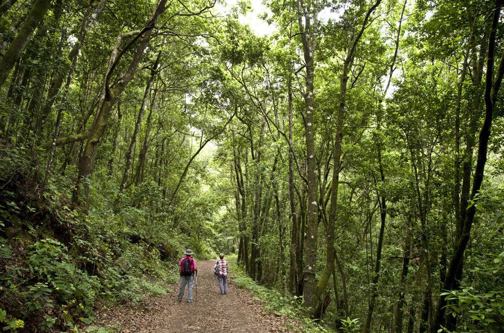 PR-TF 54 Los Silos - Las Moradas - Monte del Agua