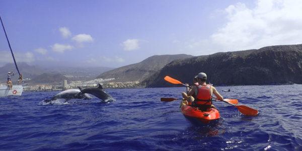 kayakdelfines