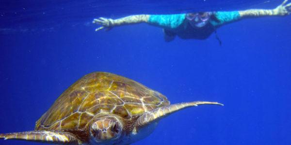 snorkeltortugas